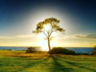Доказательства существования Бога очевидны: мир, живые существа, сам человек