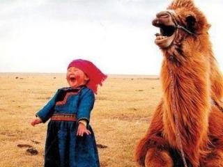 Эмиратовцы намерены закупить в Казахстане стада верблюдиц для производства молока как для внутреннего рынка, так и для возможного экспорта в Европу