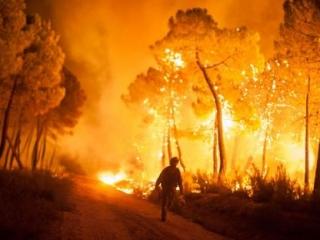 ФСБ обвиняет «Аль-Каиду» в поджогах лесов в Европе