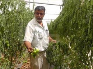 Палестина: родная земля дороже израильских миллионов