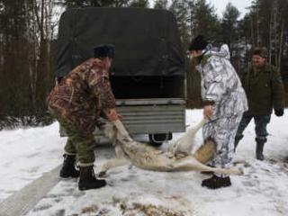 В Якутии насчитывается более 3,5 тыс. волков
