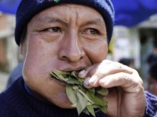 ООН разрешила боливийцам жевательный наркотик