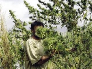 Таджикистану предложили создать наркотический бюджет