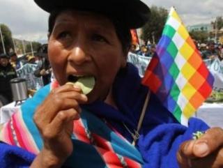 Россия запретила Боливии жевать коку