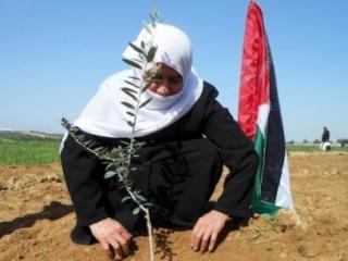 Cельское хозяйство-основа экономики Палестины
