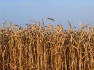 Россия поможет Египту зерном