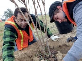 Мэр Хашми сажает деревья в своем городе