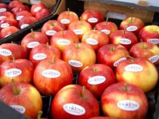 Польские фрукты и овощи отправятся в Иран и страны СНГ