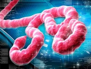 Эбола добралась до Эмиратов
