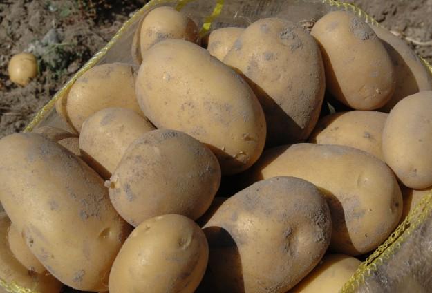 Сладкий картофель и другая продукция сельского хозяйства сегодня является основой экспорта для сектора Газа