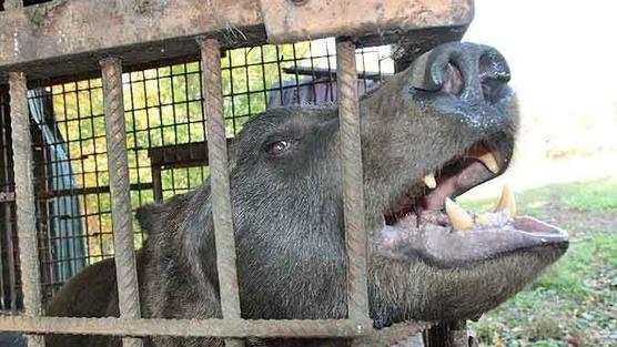 Народ требует спасти несчастного медведя