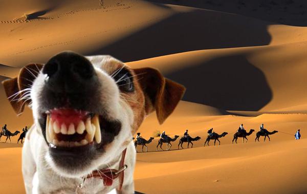 «Собака лает, а караван идет»