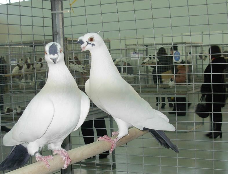 На выставке было представлено 500 птиц