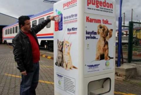 Кормушка для бездомных собак в Турции