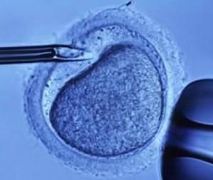 Фетва: донорство спермы и яйцеклеток противоречит исламу