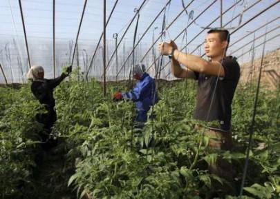 Россия прикроет земельную лазейку для Китая