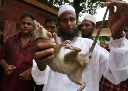 Мусульманин объявил священную войну крысам