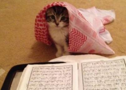 Что сделал каждый пятый мусульманин со своей кошкой