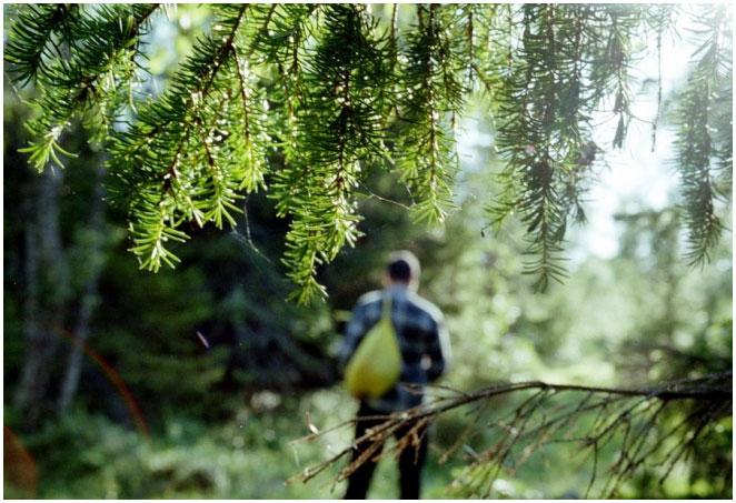 Чеченские силовики ввели разрешения для любителей леса – СМИ