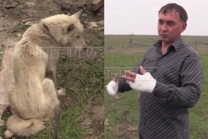 Схватка жителя Ингушетии с обезумевшим от голода волком окончилась неожиданно