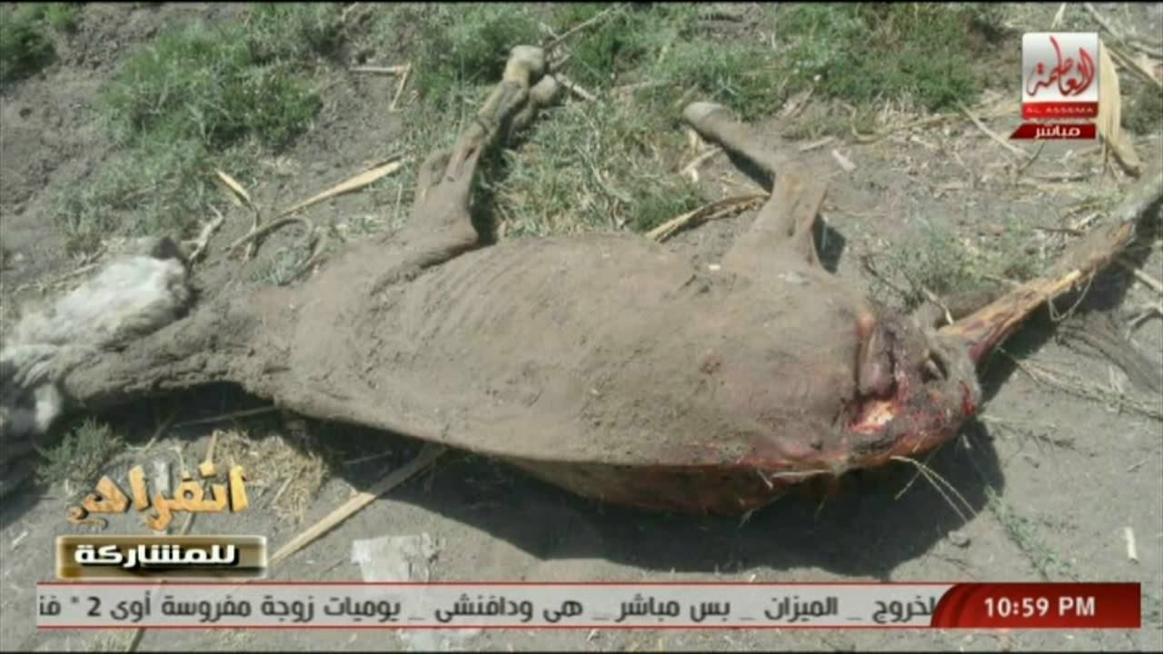 Арабский аналитик: Ослов убили «Братья-мусульмане» (ВИДЕО)