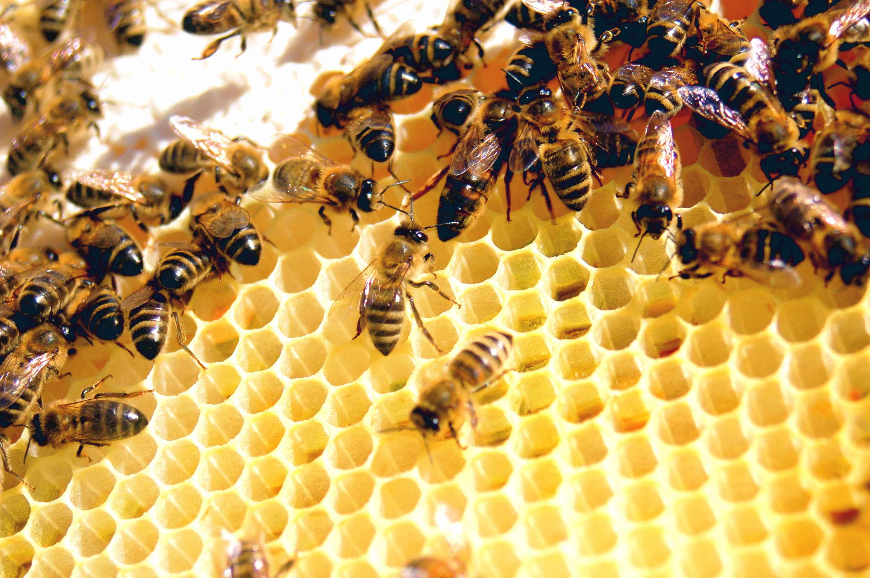 Особенности выбора пчел перед покупкой