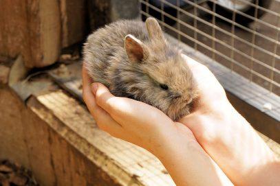 Как бесплатно стать владельцем карликового кролика?