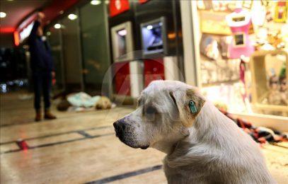 Полчище бездомных собак сбежалось в стамбульский ТЦ — что с ними сделали? (ФОТО)