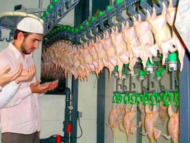 Питерская птицефабрика вынуждена перейти на халяль