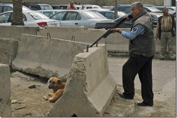 ВМахачкале граждане массово отстреливают собак