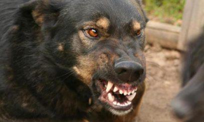 В Дагестане девочка умерла страшной смертью из-за бродячих собак
