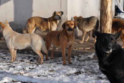 В Махачкале объявили о начале массовой стерилизации собак