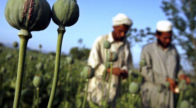 Впосольстве США вКабуле сократили шесть служащих из-за наркотиков