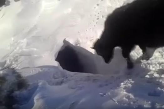 Пропавшие под снегом коровы в Казахстане напугали соцсети (ВИДЕО)