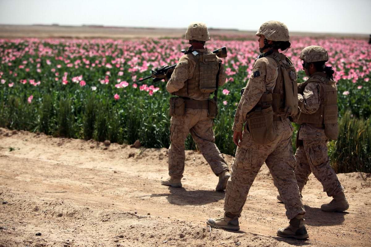 Мак стал в Афганистане основной сельскохозяйственной культурой