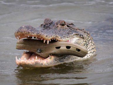 Daily Mail: крокодилы сожрали священника во время демонстрации чуда
