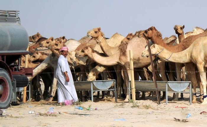 Климатологи лишили арабских правителей последней надежды