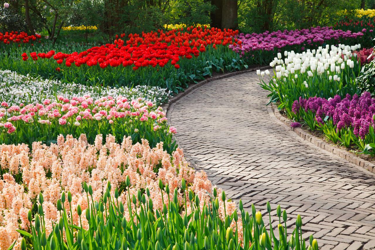 тюльпаны на даче дизайн фото меня