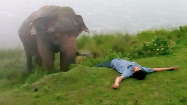 Огромный слон раздавил мужчину после совместного сэлфи (ВИДЕО)