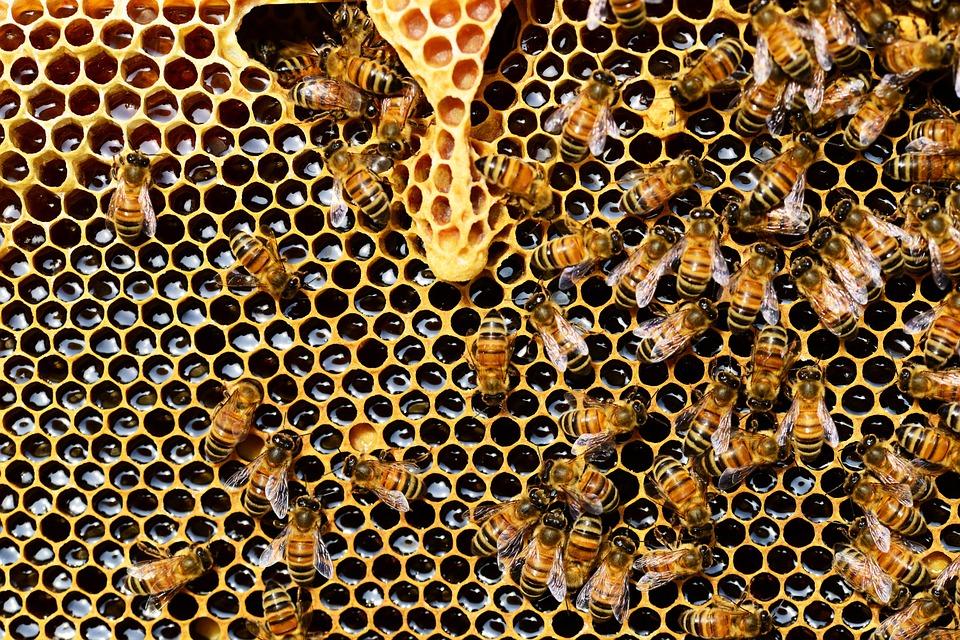 Возможен ли бизнес на пчеловодстве?