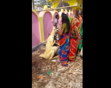 Традиционный индуизм. Если нет священной коровы, подойдет и кенгуру (ВИДЕО)