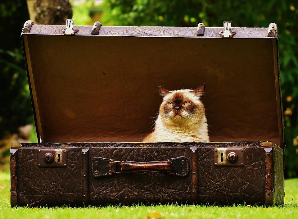 Что нужно для перевозки домашних животных в ОАЭ?