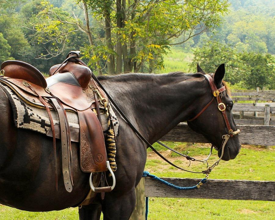 Как лучше всего выбирать седла для лошадей?