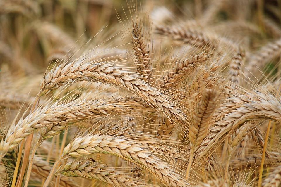 Сельскохозяйственная химия для защиты урожая и растений