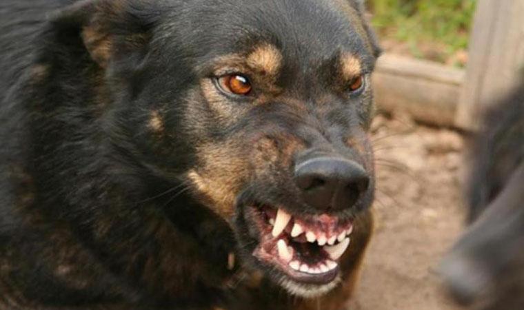 В Дагестане собаки растерзали пропавшего малыша