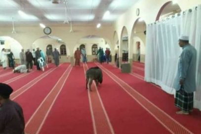 Свинья вломилась в мечеть в разгар намаза – чем все закончилось?