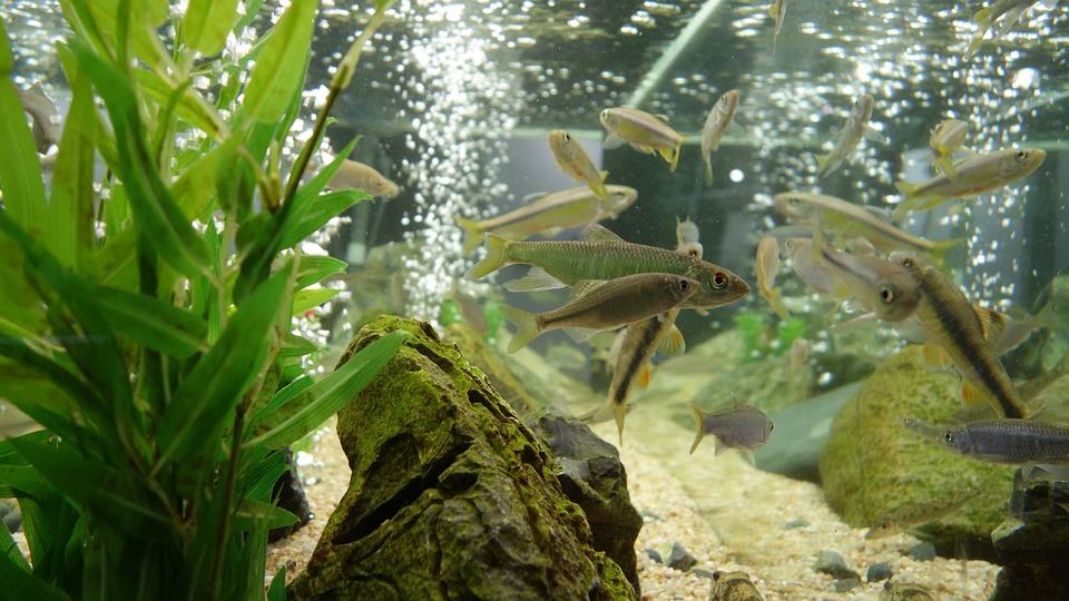 Как подойти к выбору аквариума для рыбок?
