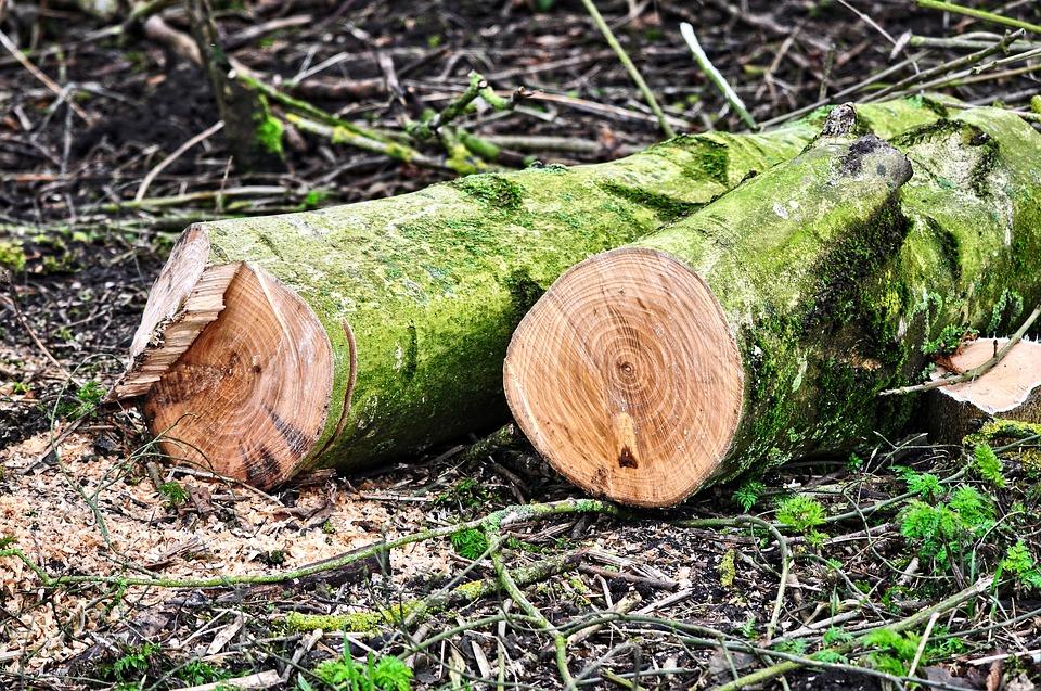 Что стоит знать об услуге по вырубке деревьев?
