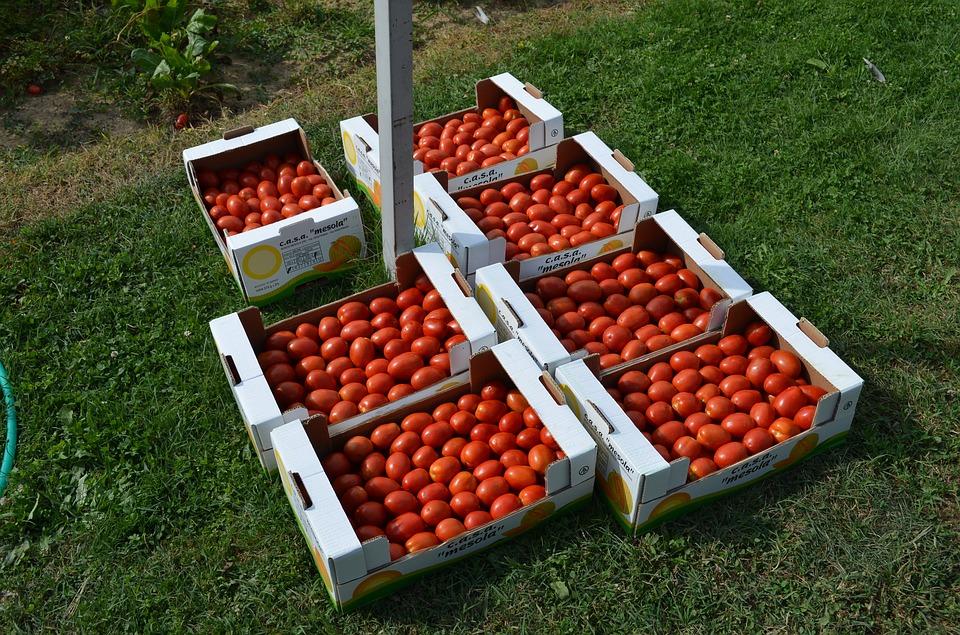 Лотки для овощей из гофрокартона