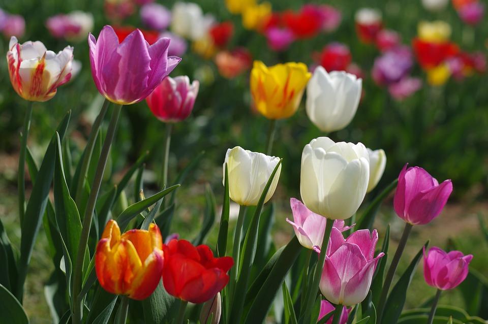 Кому доверить оптовую поставку цветов?